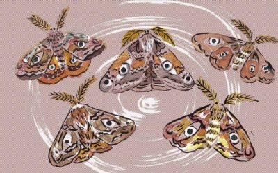 DesMcC moth illustration (flattened)