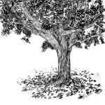 tree smol (4)