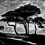 James Dodds Night Trees1