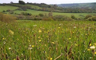 meadowfield 2