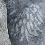 May-27-2018-FlaggyShore-FossilStone(3)-Ireland (002)