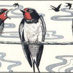 SwallowsSmall (003)